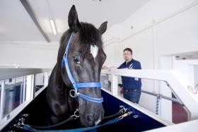Mehr Infos zur Rehabilitation für Pferde