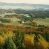 Blick über den Herbstwald vom Friedrichsberg