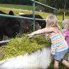 Tiere füttern auf dem Riedler-Hof