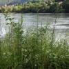 Natur am Donauufer
