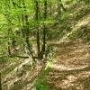 Wanderwege durch die Donauleite