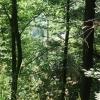 Grüne Wälder in der Donauleite